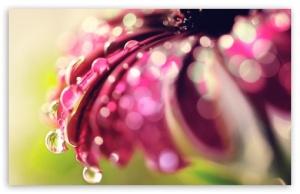 bokeh_drops__flower-t2